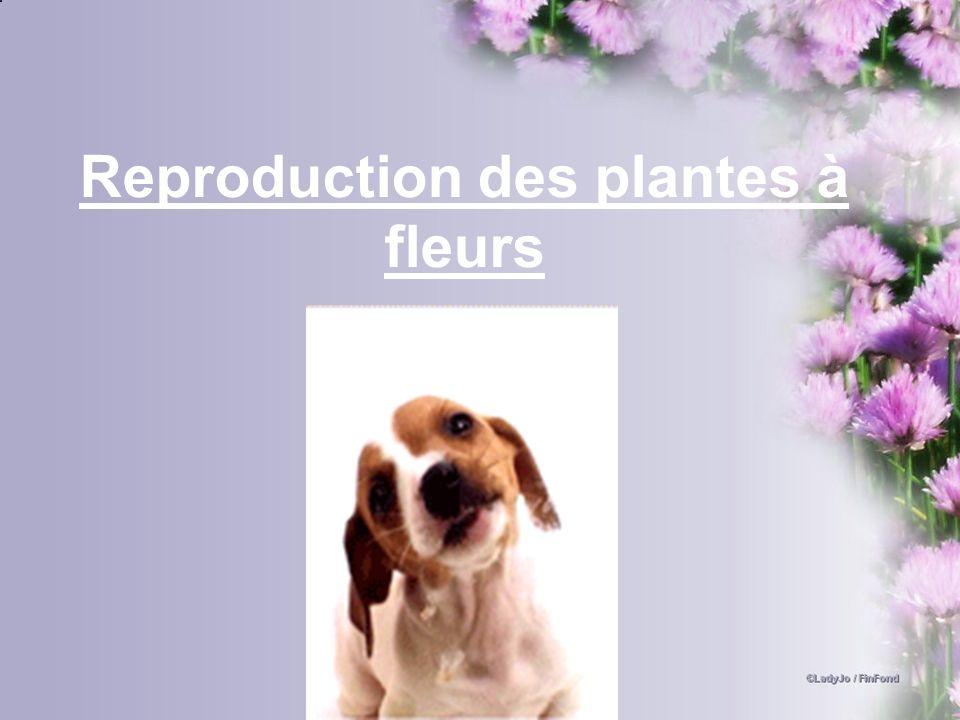 Reproduction des plantes à fleurs