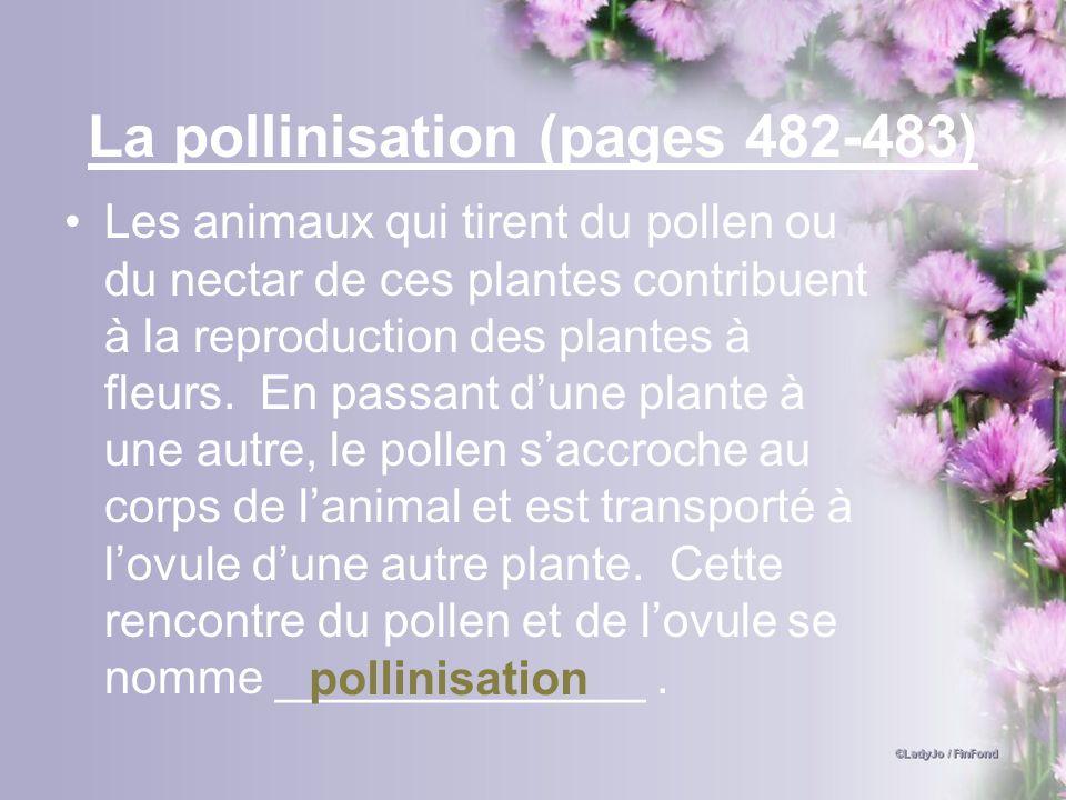 La pollinisation (pages 482-483) Les animaux qui tirent du pollen ou du nectar de ces plantes contribuent à la reproduction des plantes à fleurs. En p