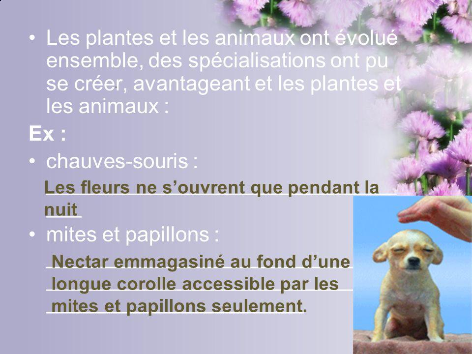 Les plantes et les animaux ont évolué ensemble, des spécialisations ont pu se créer, avantageant et les plantes et les animaux : Ex : chauves-souris :