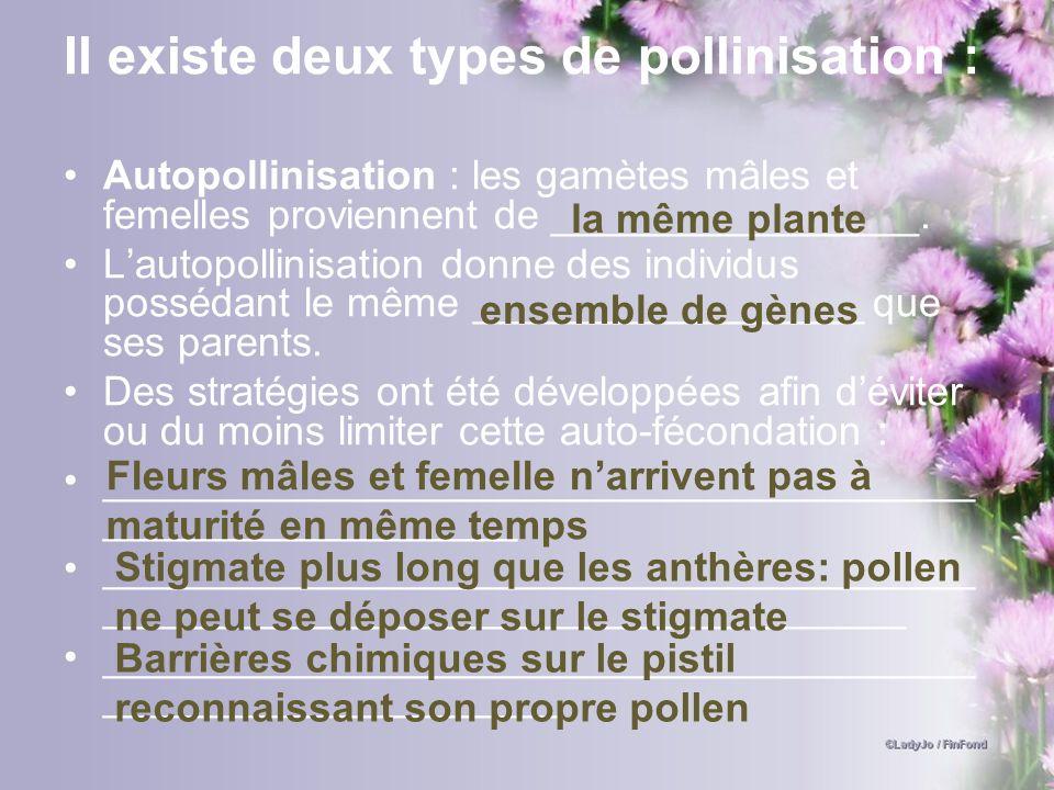 Il existe deux types de pollinisation : Autopollinisation : les gamètes mâles et femelles proviennent de ________________. Lautopollinisation donne de