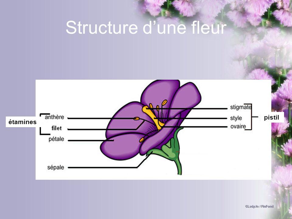 Structure dune fleur étamines pistil