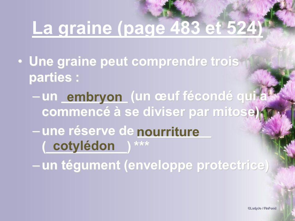 La graine (page 483 et 524) Une graine peut comprendre trois parties :Une graine peut comprendre trois parties : –un _________ (un œuf fécondé qui a c
