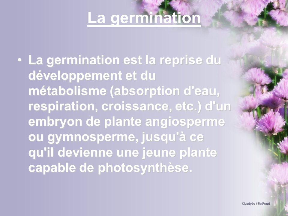 La germination La germination est la reprise du développement et du métabolisme (absorption d'eau, respiration, croissance, etc.) d'un embryon de plan