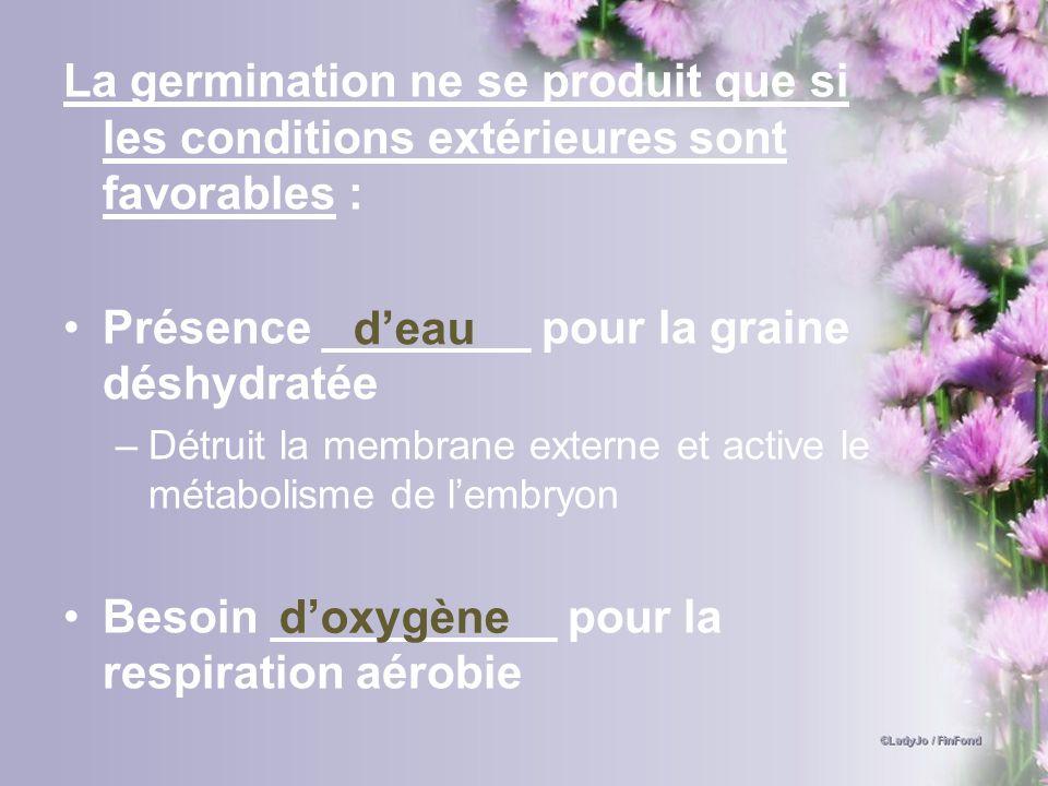 La germination ne se produit que si les conditions extérieures sont favorables : Présence ________ pour la graine déshydratée –Détruit la membrane ext