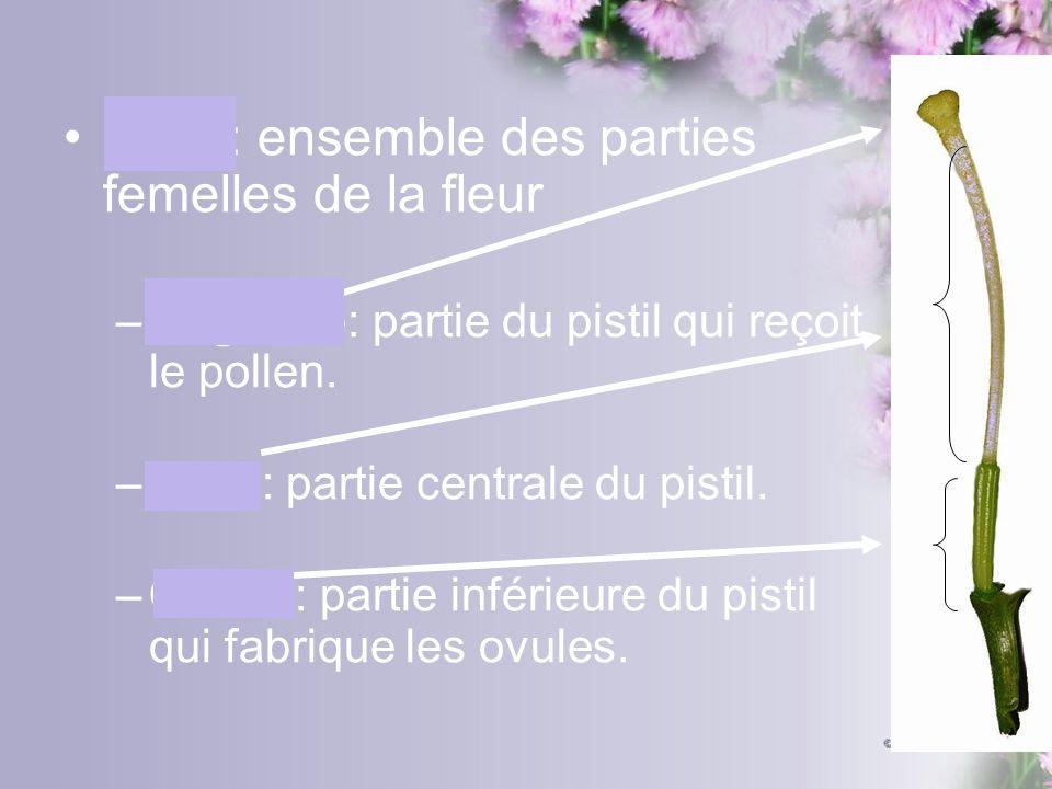 Pistil: ensemble des parties femelles de la fleur –Stigmate: partie du pistil qui reçoit le pollen. –Style: partie centrale du pistil. –Ovaire: partie