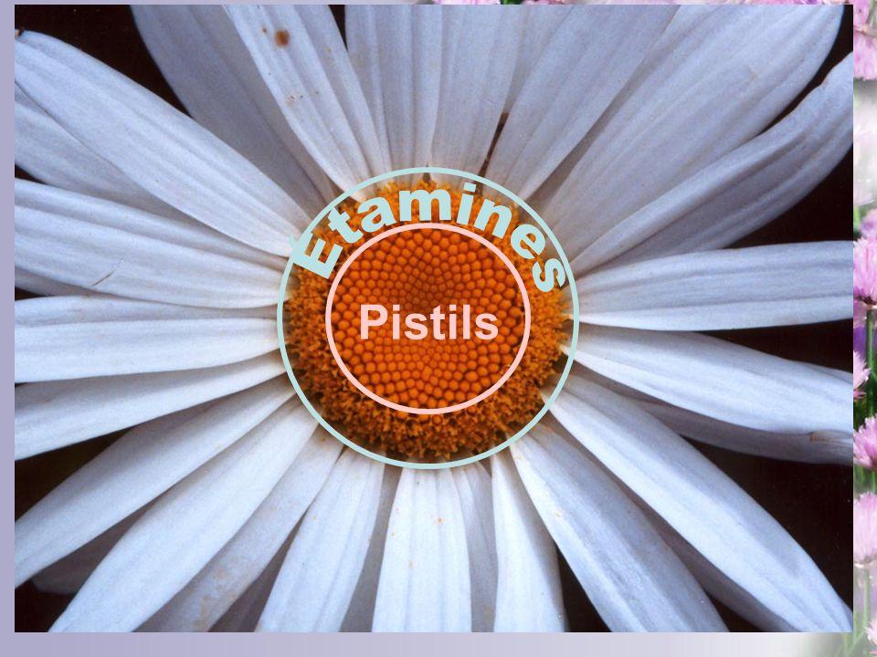 Pistils