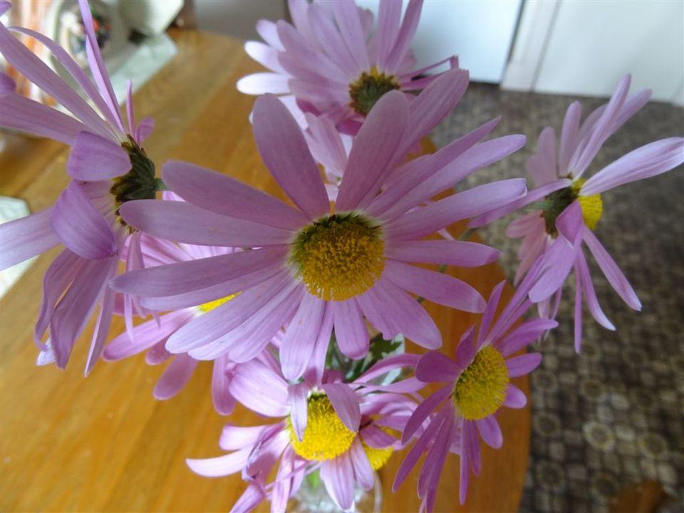Les dernières fleurs dautomne par Jean Guy Ce sont les dernières fleurs cueillies du jardin pour les voir jusqu a la fenaison