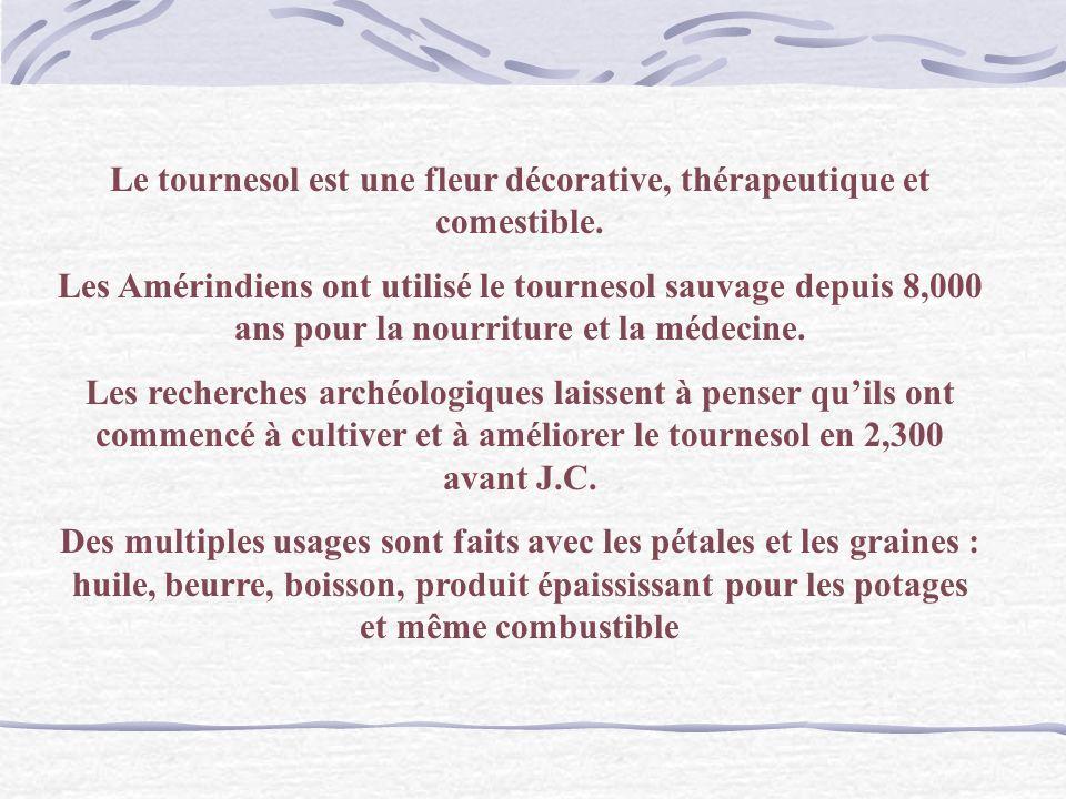 Van Gogh Les Tournesols Langage des Fleurs : LOrgueil