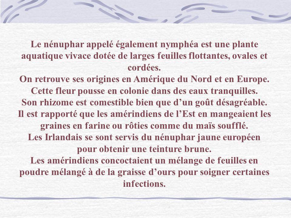 Monet Les Nympheas Langage des Fleurs : La Sagesse.