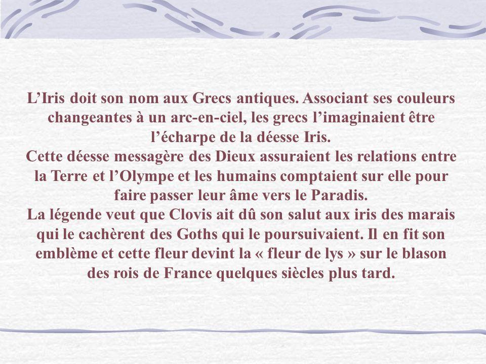 Van Gogh Les Iris Langage des fleurs : Messager des bonnes nouvelles.