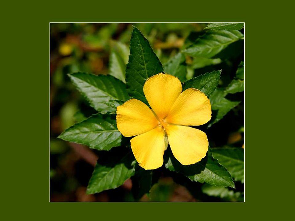 La fantaisie est le printemps perpétuel des gens heureux et d agréable compagnie. Colette