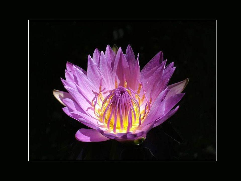 ... Pour respirer le parfum de la rose qui borde le chemin, on doit d'abord s'arrêter et s'agenouiller. La beauté demande un temps d'arrêt, d'observat