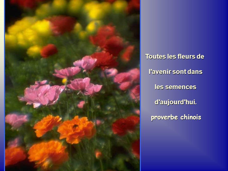 Toutes les fleurs de l avenir sont dans les semences d aujourd hui. proverbe chinois