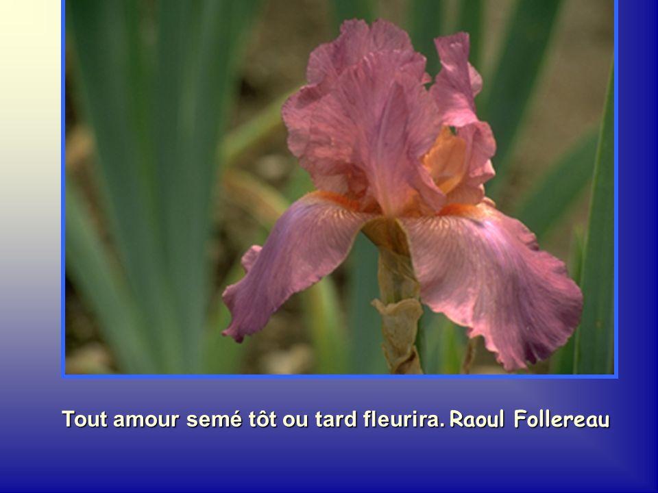 Une fleur ne sèche jamais sans laisser sur le sol un bouquet de semences. François Gervais