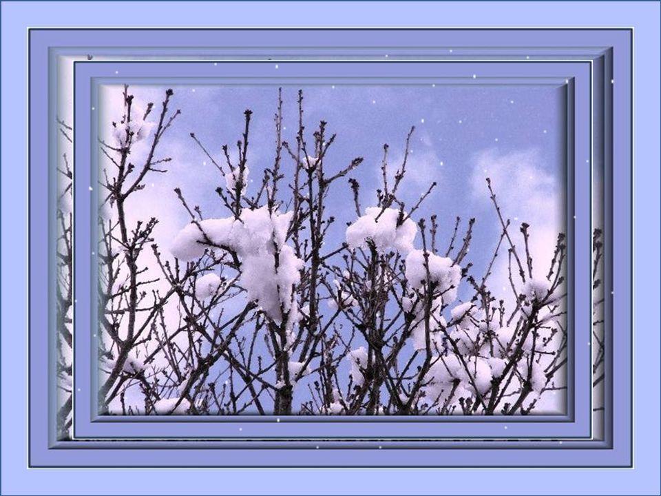 Fleurs de neige sans cesse renouvelées; Au petit matin, joyeusement vous valsez; Enthousiasme, jaime tant vous observer; Fleurs uniques dans votre ori
