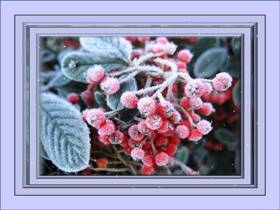 Fleurs de givre accrochées à ma fenêtre, Vous mamenez vers des endroits de rêve; Si jolies dans vos habits de dentelle; De blanc vêtues, ce que vous ê