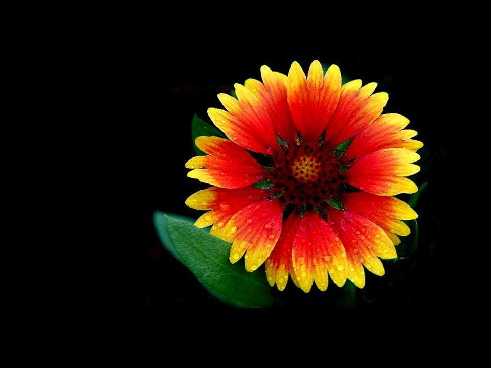 Les fleurs du printemps sont les rêves de lhiver… Khalil Gibran