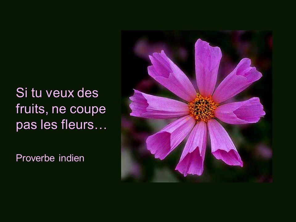 Les fleurs ne sont pas capricieuses; elles poussent même dans les ruines et sur les champs de bataille. Les fleurs ne sont pas capricieuses; elles pou