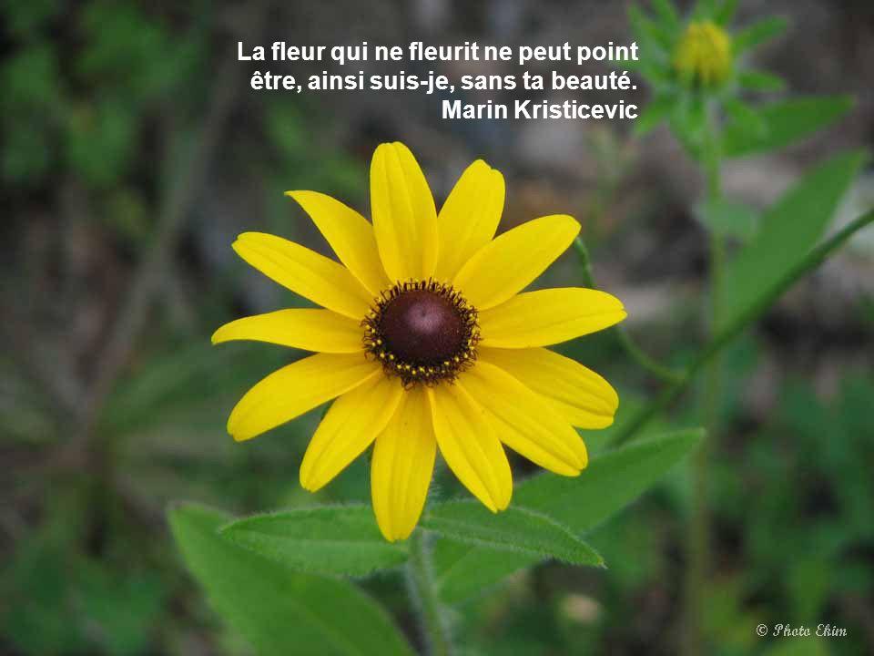 L'amitié sans confiance, c'est une fleur sans parfum. Laure Conan