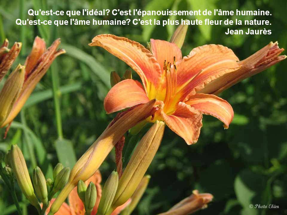 L'amour, s'il tient en une seule fleur, est infini. Antonio Porchia