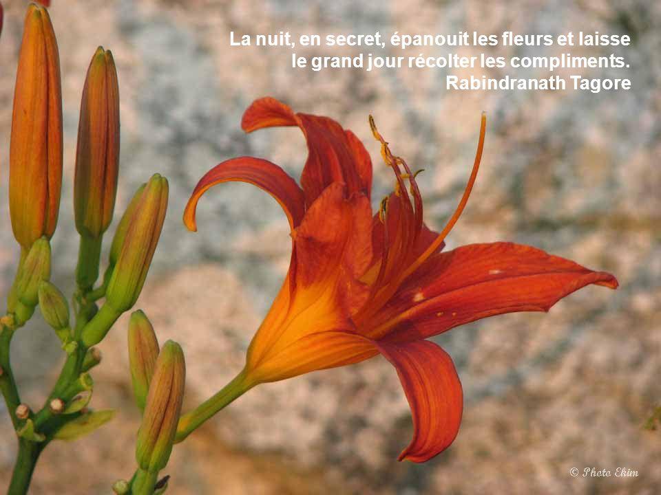 Les passions de l'artiste sont pareilles aux fleurs, par leur parfum intense et leur courte durée. Vicente Blasco Ibanez