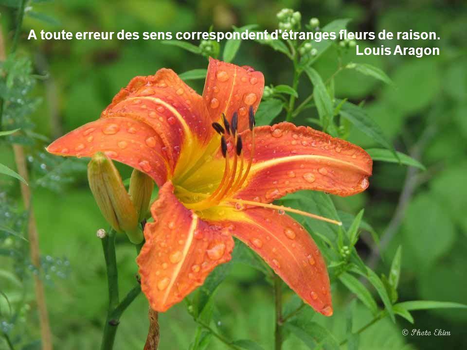 La nuit, en secret, épanouit les fleurs et laisse le grand jour récolter les compliments. Rabindranath Tagore