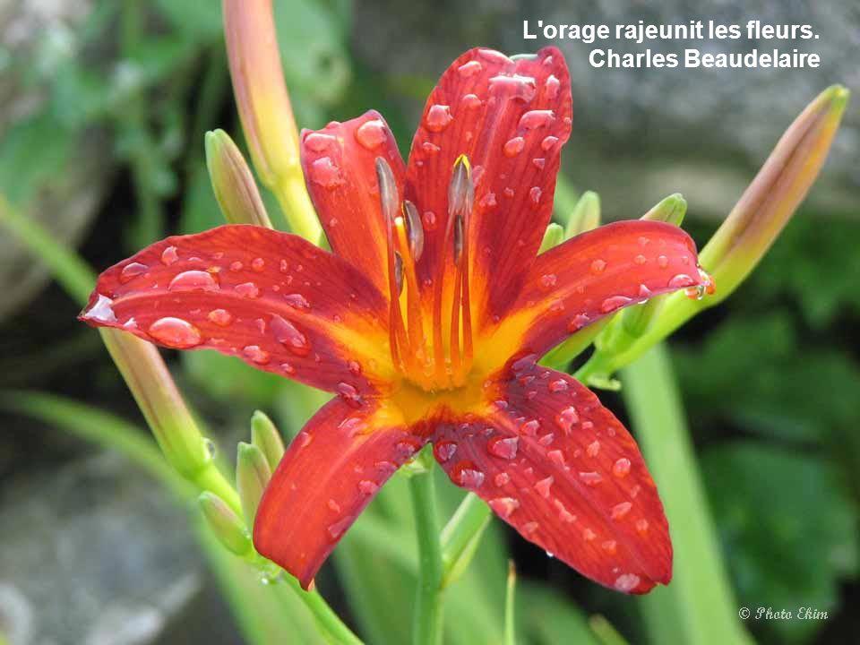 A toute erreur des sens correspondent d'étranges fleurs de raison. Louis Aragon
