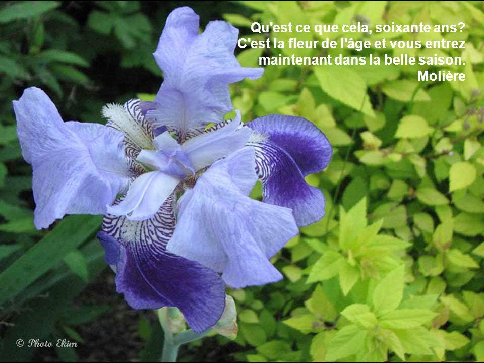 L'orage rajeunit les fleurs. Charles Beaudelaire