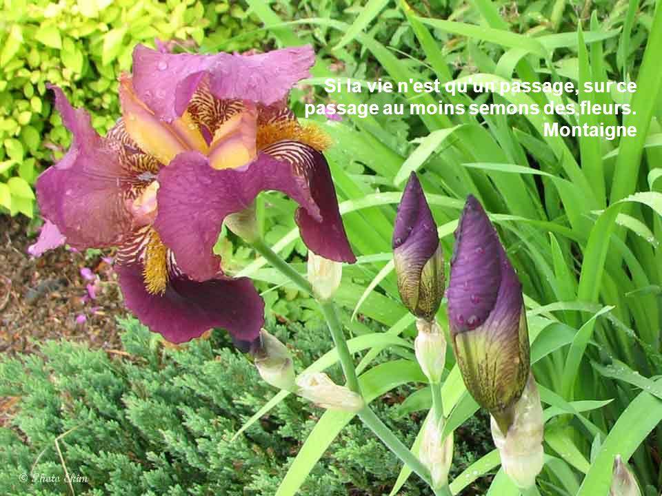 La plus belle de toutes les fleurs est la fleur de la liberté. Jean Fischart