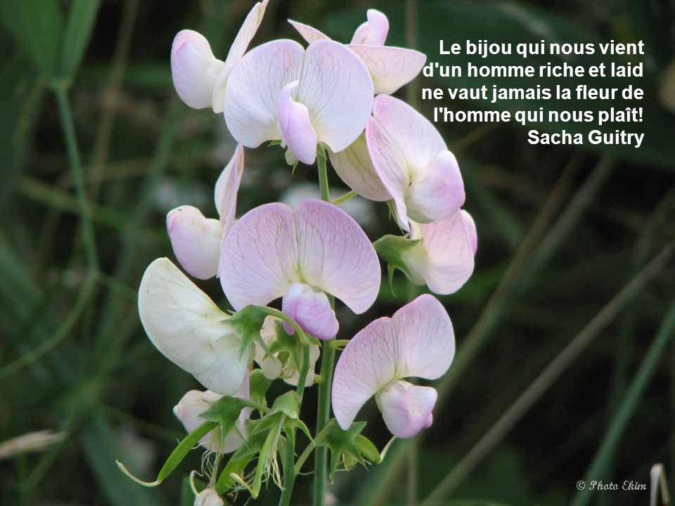Si la vie n'est qu'un passage, sur ce passage au moins semons des fleurs. Montaigne