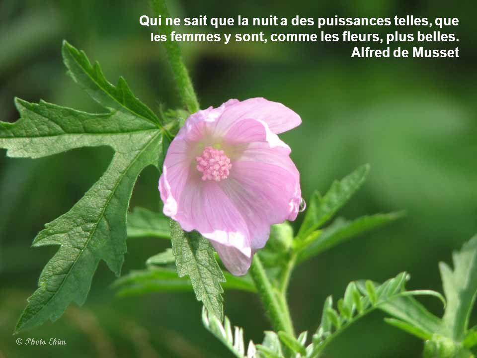 L'homme qui n'est qu'intelligence, l'homme prosaïque, est une fleur stérile qui n'a que des étamines; le poète est une fleur féconde et complète. Henr