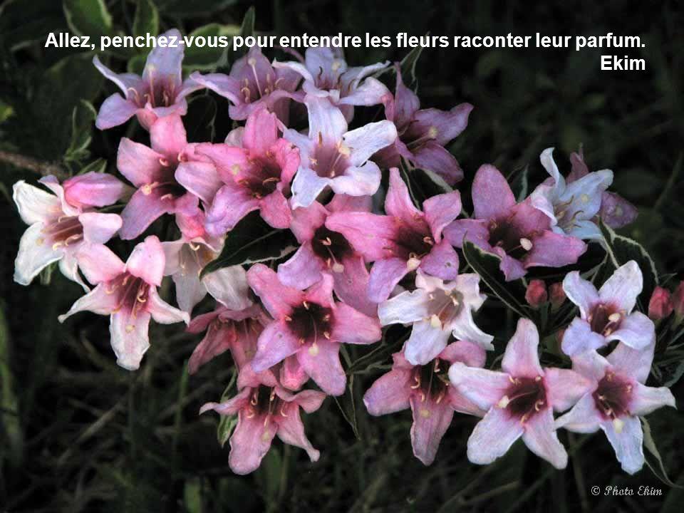Qui ne sait que la nuit a des puissances telles, que les femmes y sont, comme les fleurs, plus belles. Alfred de Musset