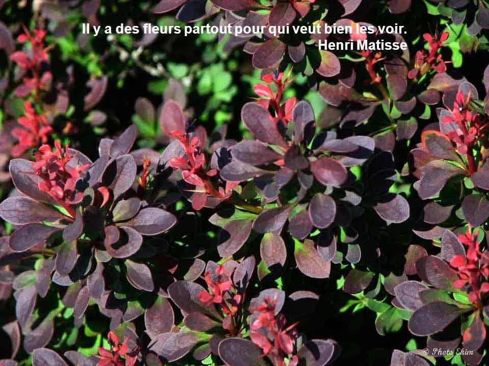 Au pays de fleurs, plus on est petit, plus on embaume. Alphonse Daudet