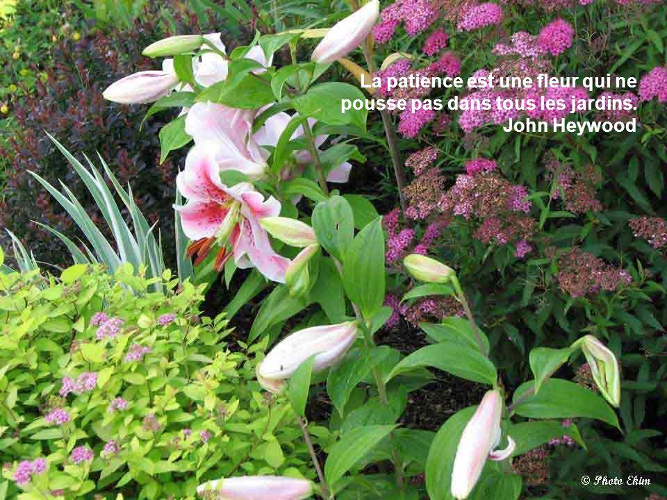 La patience est une fleur qui ne pousse pas dans tous les jardins. John Heywood