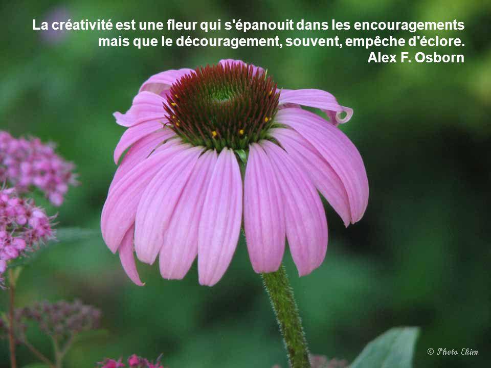 Il y a des fleurs partout pour qui veut bien les voir. Henri Matisse