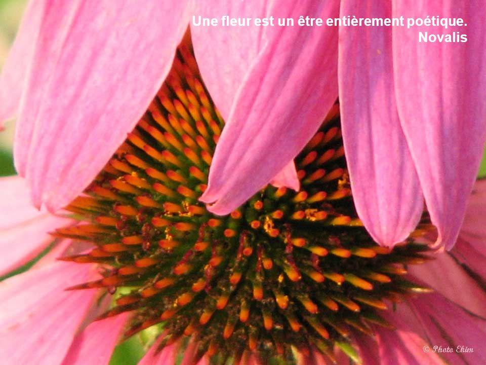 La créativité est une fleur qui s'épanouit dans les encouragements mais que le découragement, souvent, empêche d'éclore. Alex F. Osborn