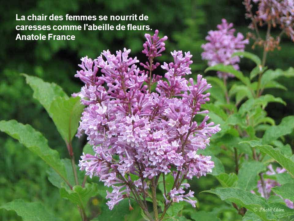 Une fleur est un être entièrement poétique. Novalis