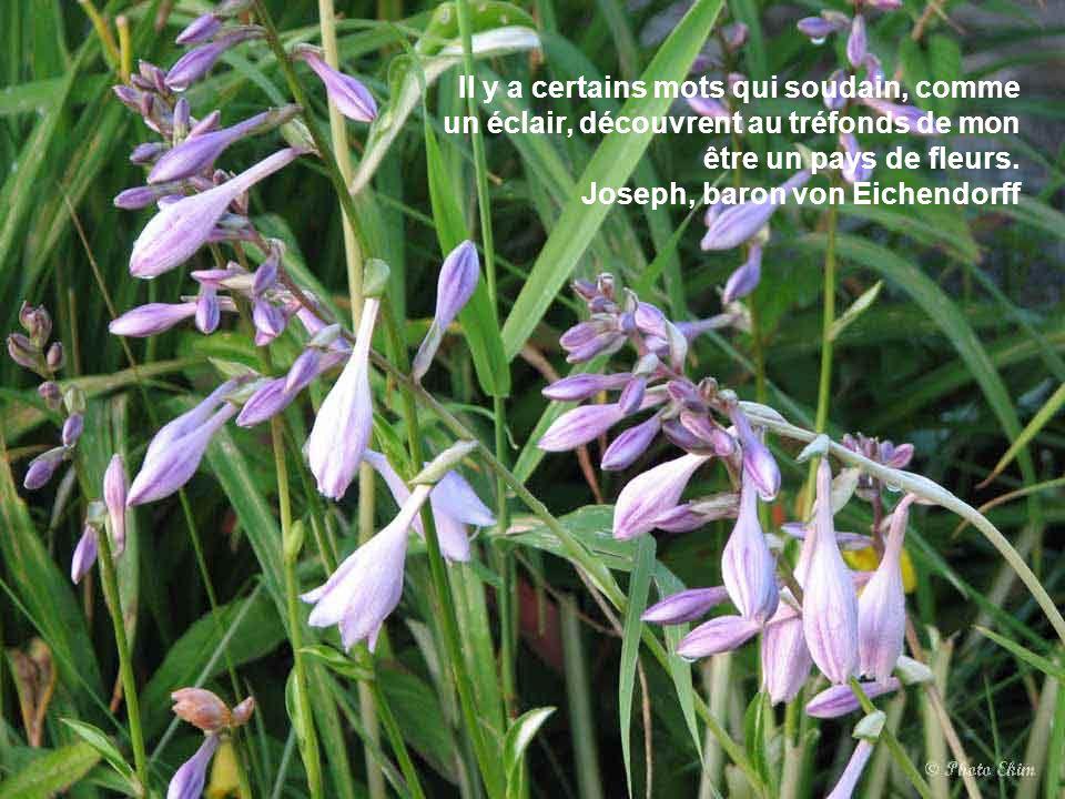 La chair des femmes se nourrit de caresses comme l'abeille de fleurs. Anatole France