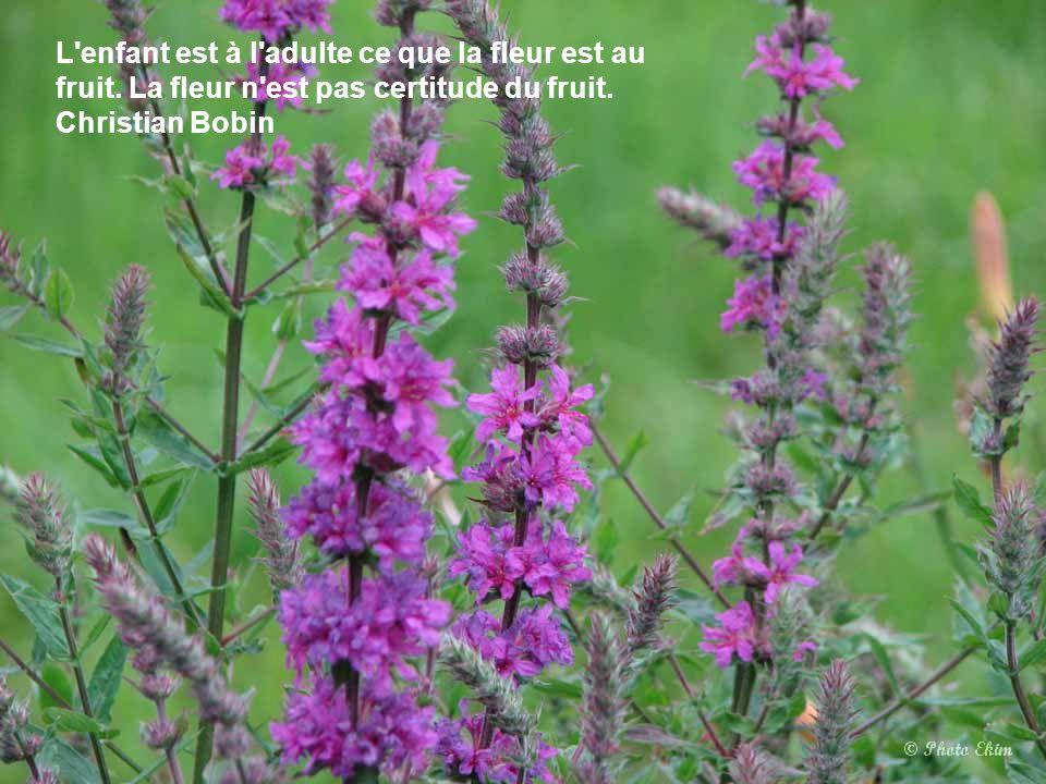 Le cimetière est un jardin où l'on vient apporter des fleurs une fois par an. Léon Bloy