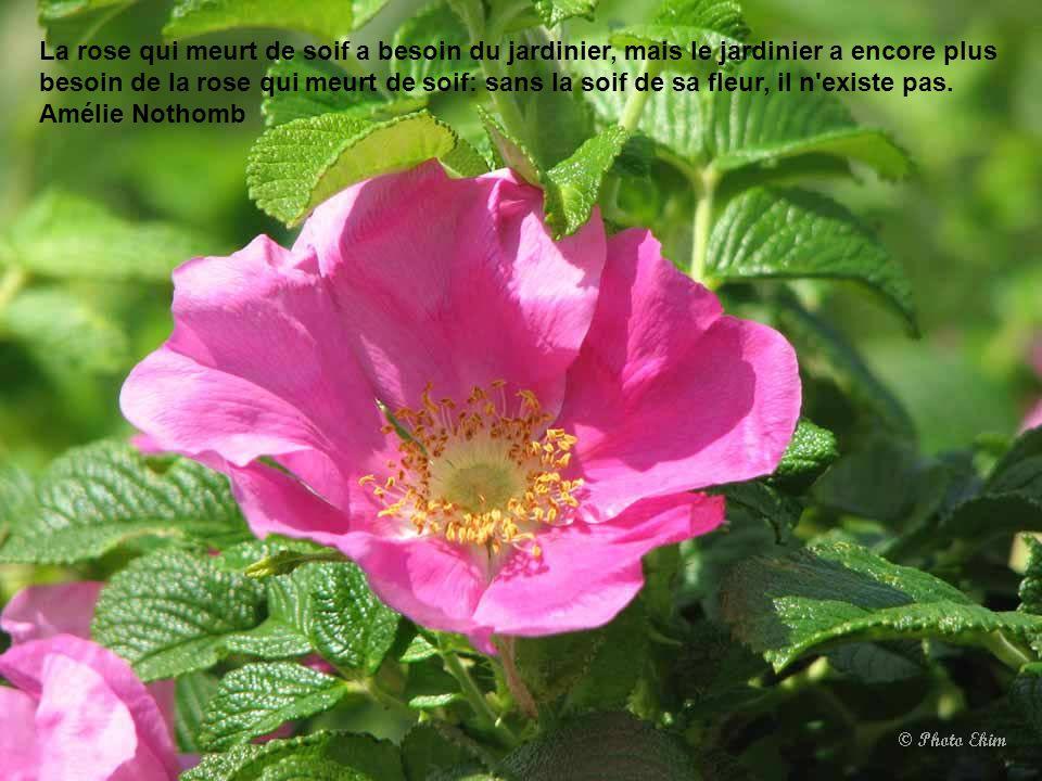 L'enfant est à l'adulte ce que la fleur est au fruit. La fleur n'est pas certitude du fruit. Christian Bobin