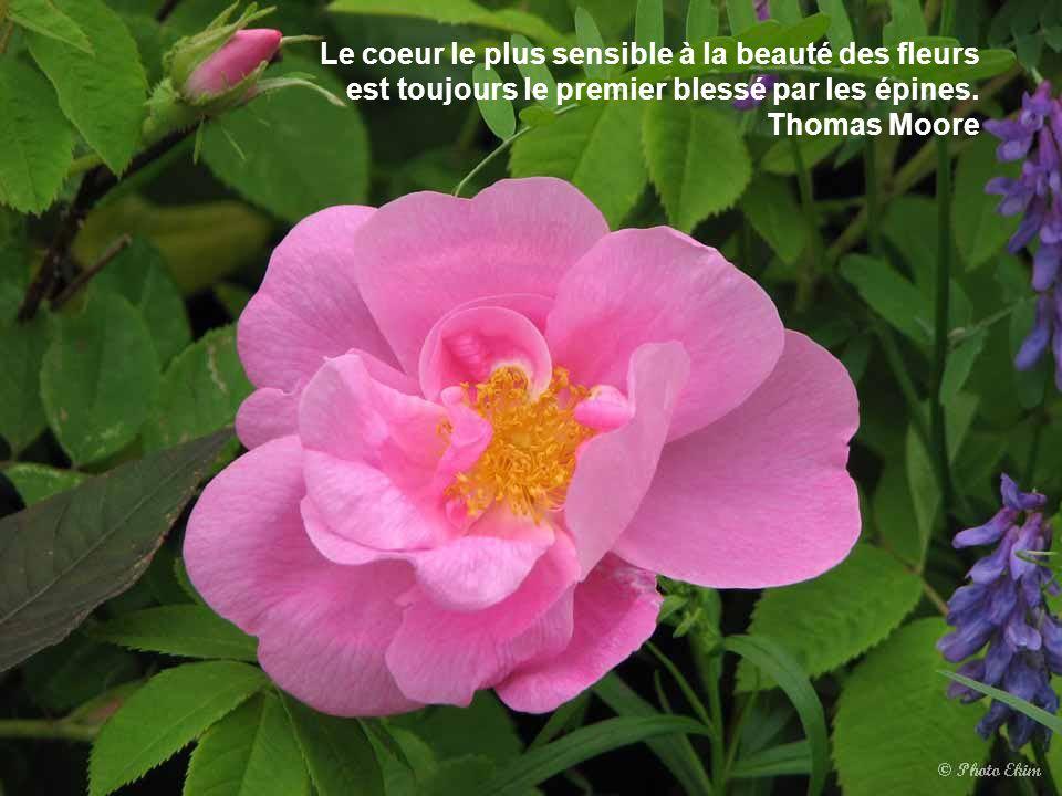 La rose qui meurt de soif a besoin du jardinier, mais le jardinier a encore plus besoin de la rose qui meurt de soif: sans la soif de sa fleur, il n'e