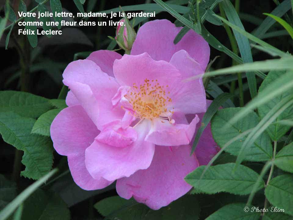 Le coeur le plus sensible à la beauté des fleurs est toujours le premier blessé par les épines. Thomas Moore