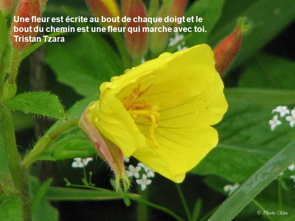 Un réveil d'enfants, c'est une ouverture de fleurs. Victor Hugo