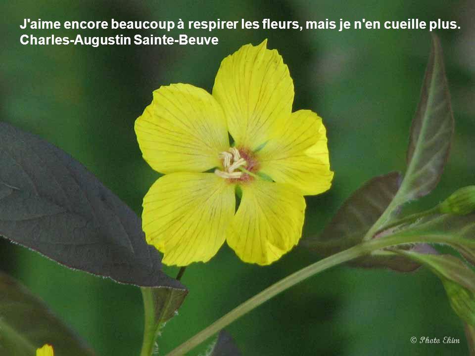 Une fleur est écrite au bout de chaque doigt et le bout du chemin est une fleur qui marche avec toi. Tristan Tzara