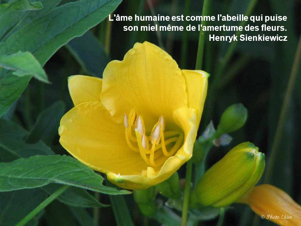 L âme humaine est comme l abeille qui puise son miel même de l amertume des fleurs.