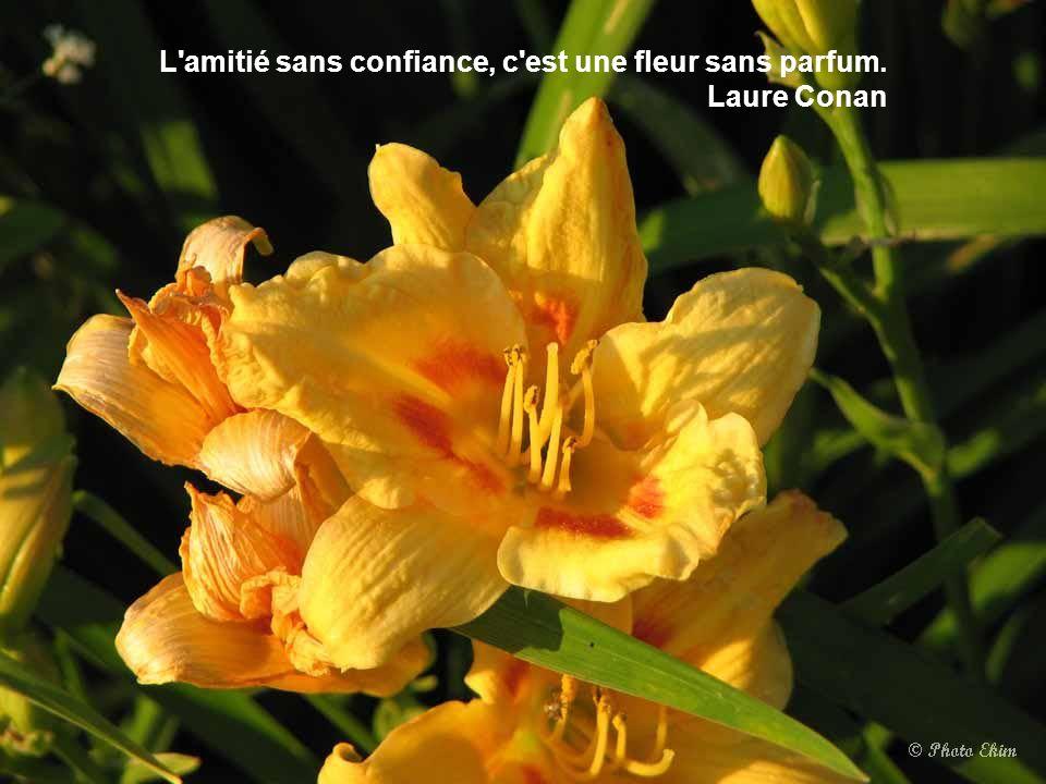 L'âme humaine est comme l'abeille qui puise son miel même de l'amertume des fleurs. Henryk Sienkiewicz