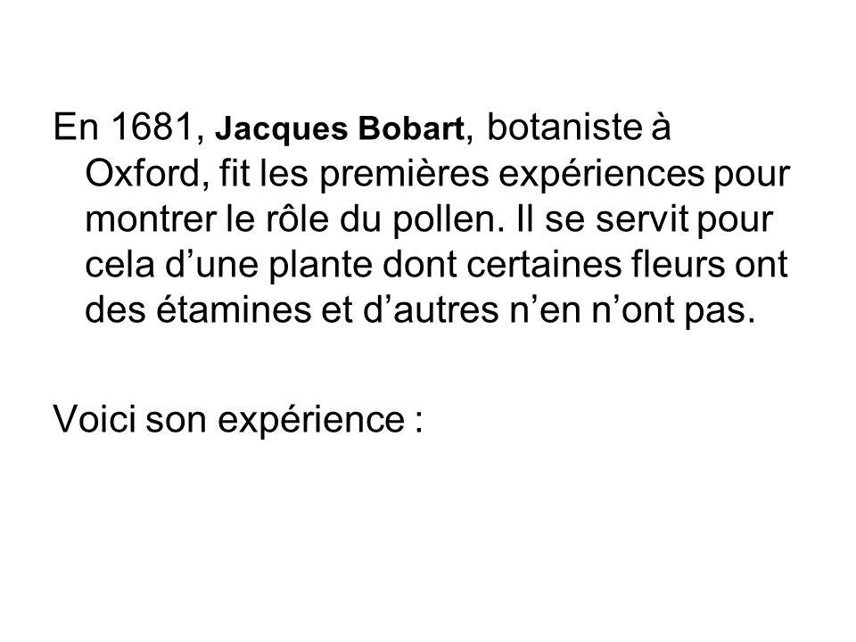 En 1681, Jacques Bobart, botaniste à Oxford, fit les premières expériences pour montrer le rôle du pollen. Il se servit pour cela dune plante dont cer