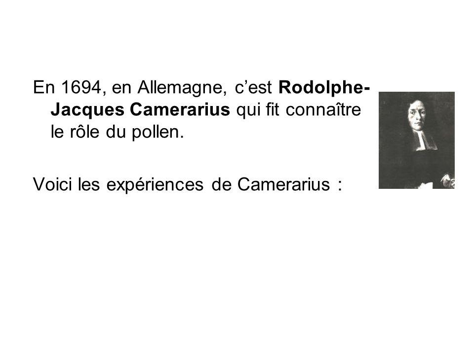 En 1694, en Allemagne, cest Rodolphe- Jacques Camerarius qui fit connaître le rôle du pollen. Voici les expériences de Camerarius :