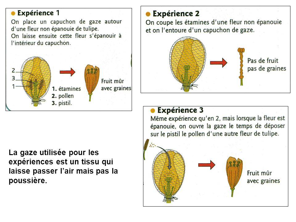 Mais en 1700, malgré les expériences de Bobart et Camerarius, Tournefort, un botaniste français, refusait le rôle du pollen dans la formation du fruit et des graines.