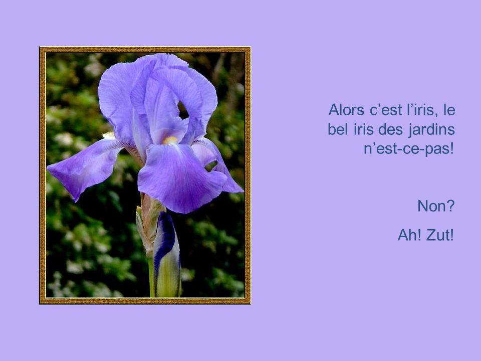 Alors cest liris, le bel iris des jardins nest-ce-pas! Non? Ah! Zut!